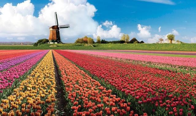 Como chegar ao Jardim de flores Keukenhof em Amsterdã