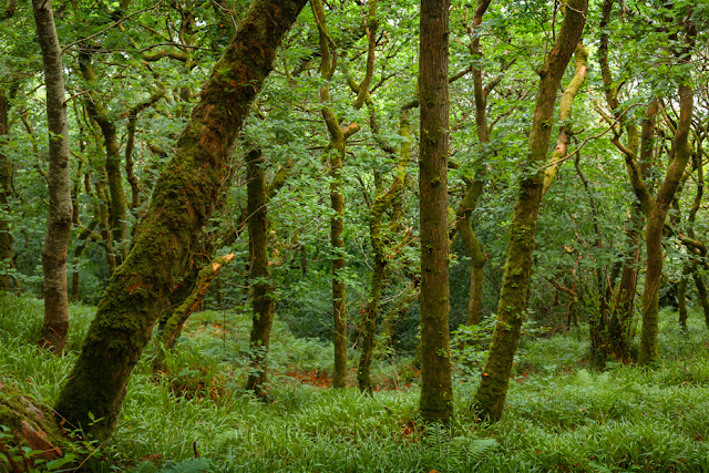 Exmoor National Park coastal path passes through atmospheric woodland by Martyn Ferry Photography