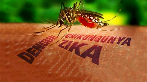 virus zika dikesan di indonesia, penemuan kes positif virus zika di Sumatera, virus zika ditemui di Indonesia, rakyat indonesia dijangkiti virus zika