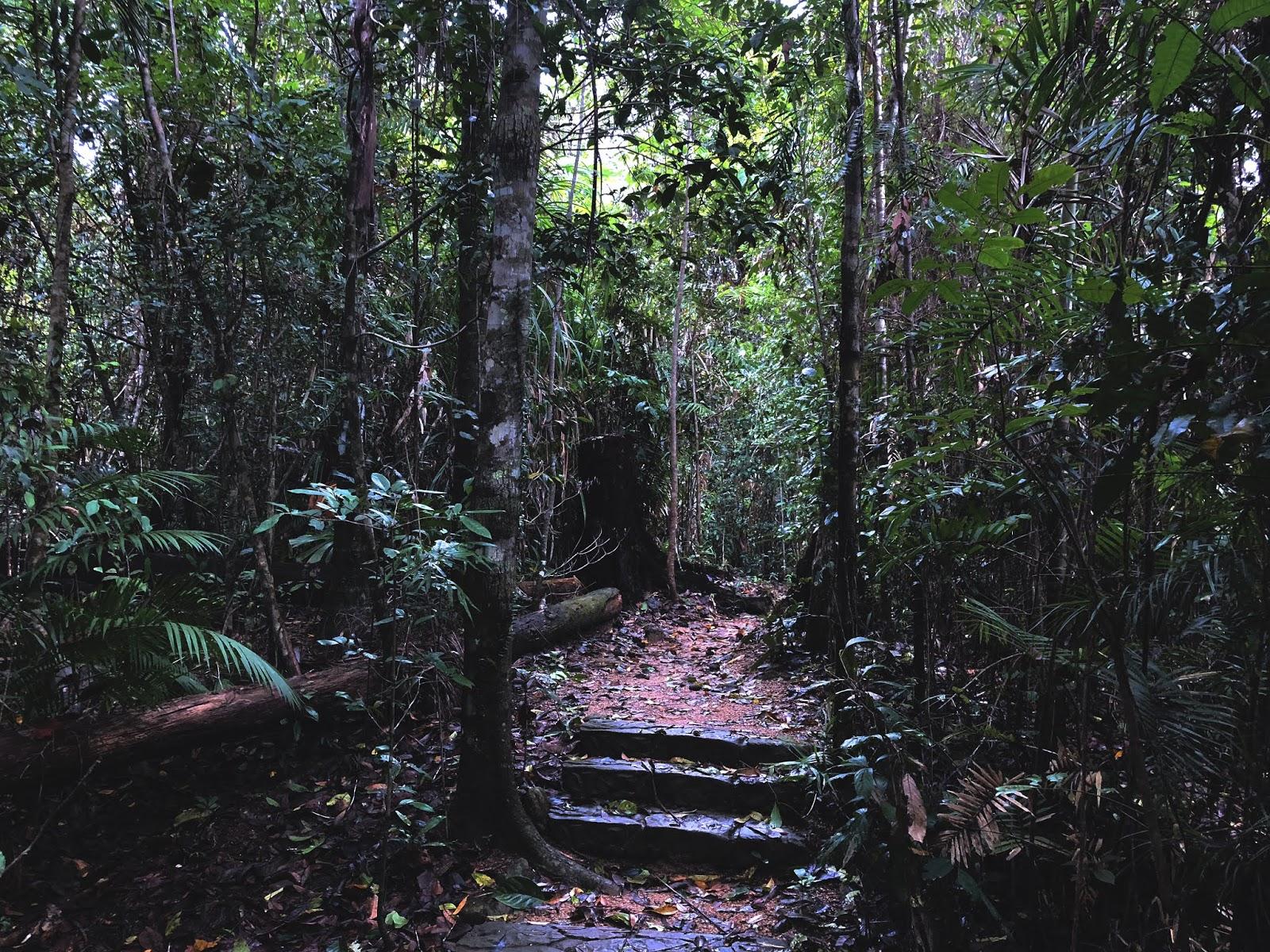 Las deszczowy w australijskim miasteczku Mission Beach. W centralnej części widać 3 kamienne schodki.