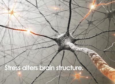Το προγεννητικό άγχος και η ανάπτυξη του εγκεφάλου
