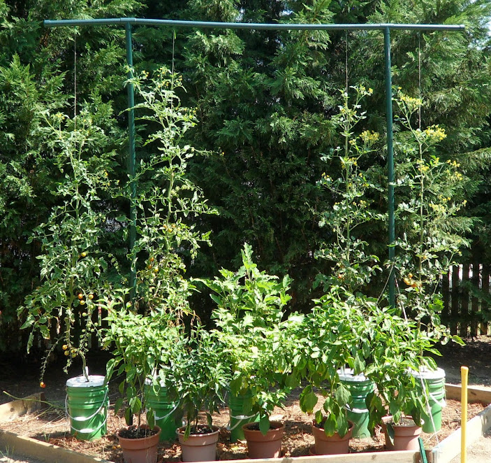 Vertical Tomato Gardening: Garden Grow: Growing Vertically