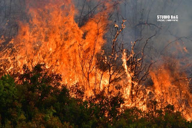 Δασική φωτιά στις Κεχριές Κορινθίας - Σπεύδουν πυροσβεστικές δυνάμεις και από την Αργολίδα
