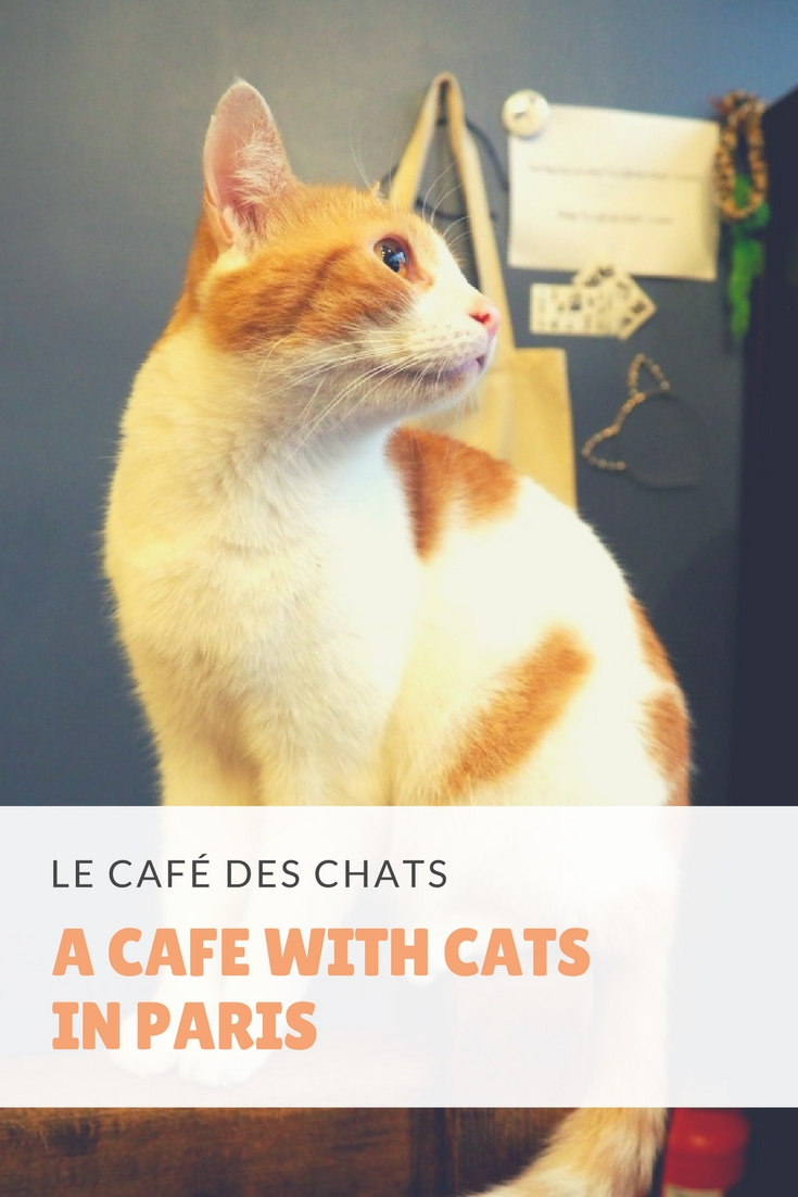 café with cats in paris