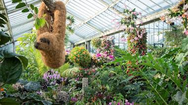 Las orquídeas de Colombia en el festival Kew Orchids 2019