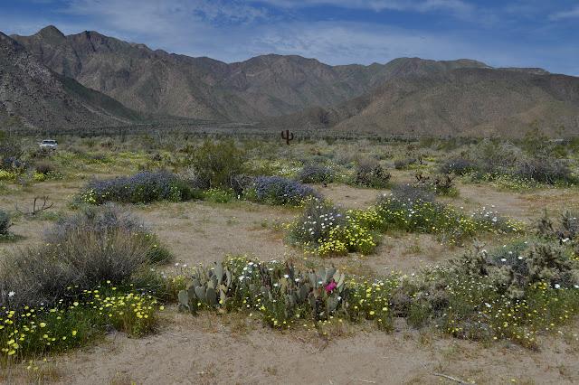 metal cactus among flowers