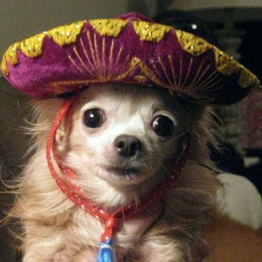 Cute Animals Wearing Sombreros 8 Pics Amazing Creatures