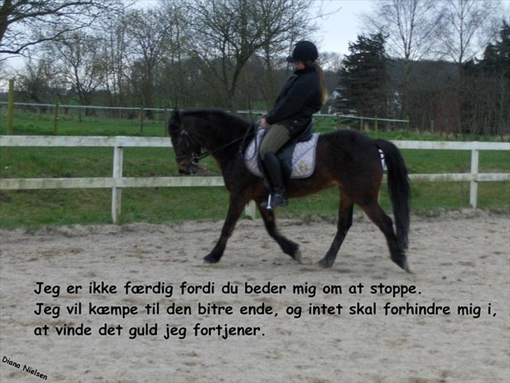 heste citater citater om livet: heste citater heste citater