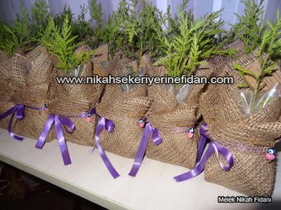 Sırma Bora Nikah Çamı İzmir 3