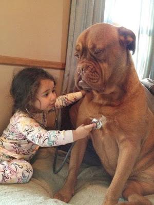 niña beterinaria con su perro gigante
