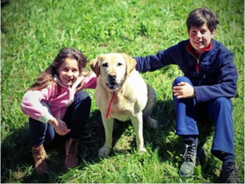Autism Assistance Dogs