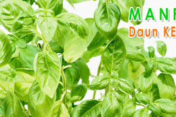 Manfaat daun kemangi bagi kesehatan - BrankasInfo