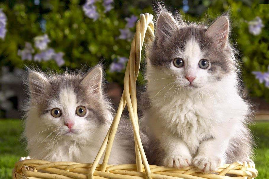 cute-cats-babies