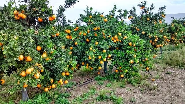 Νέα από τη πορτοκαλιά: Τι λένε οι ζυγαριές σε όλη την Ελλάδα - Σήμερα 24 Απριλίου 2016