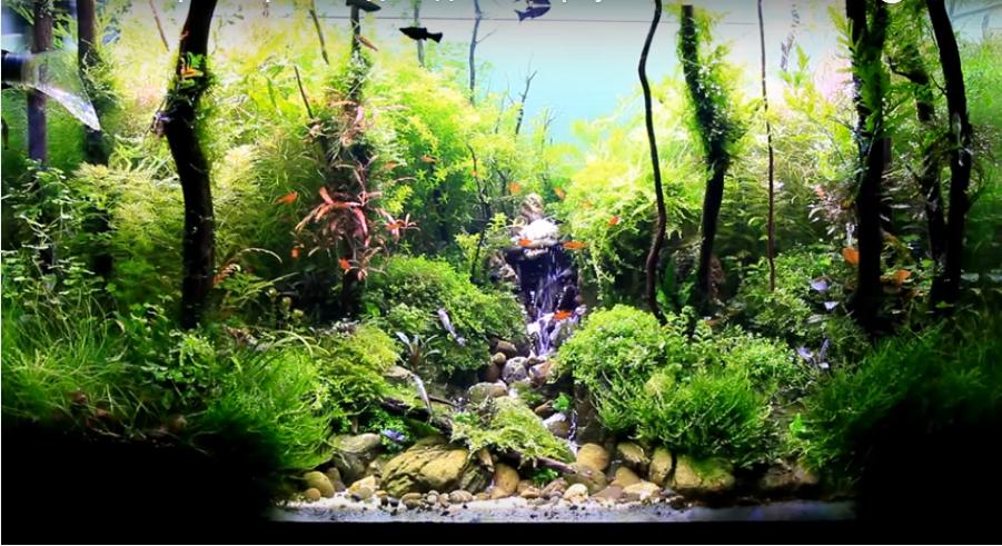 Hồ thủy sinh suối thác rất đẹp của Viktor Vin
