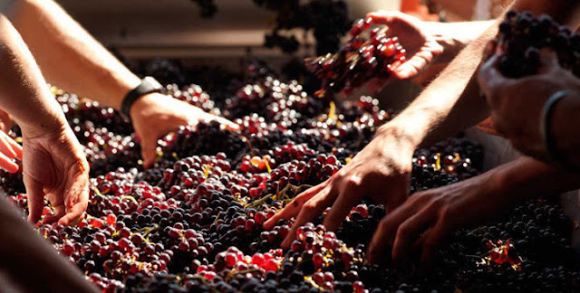 Sự trở lại của một huyền thoại rượu vang nhập khẩu