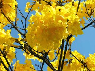 رمزيات زهور