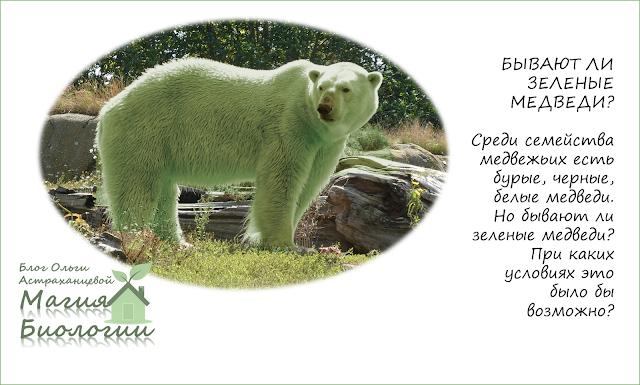 зеленый-медведь-магия-биологии-креативное-мышление