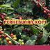 Pengelolaan Budidaya Perkebunan Kopi di Indonesia