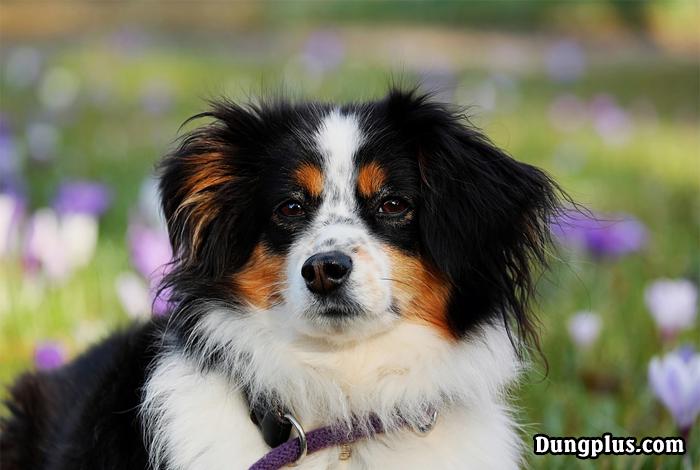 ánh mắt buồn của một chú chó