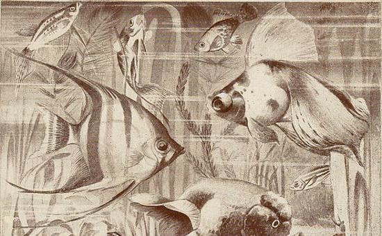 """Magazine: """"Aquatic Life"""" (1917)"""