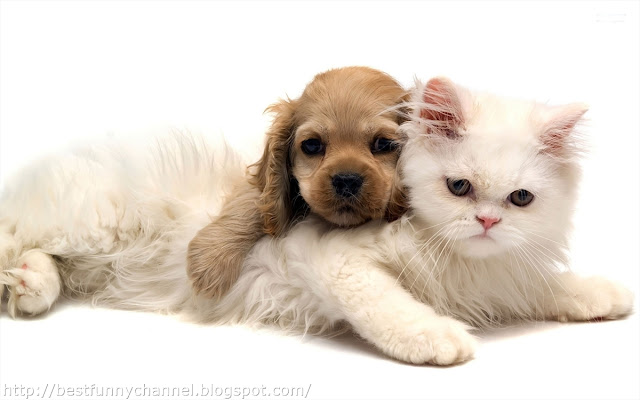Beautiful kitten and puppy
