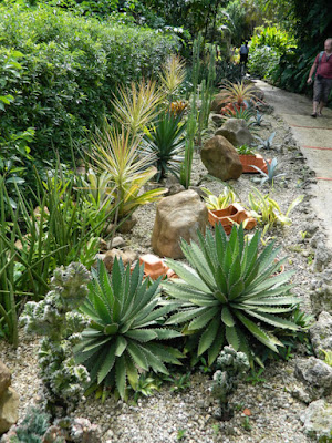 Agaves succulents cacti at Orchid World Barbados by garden muses-not another Toronto gardening blog