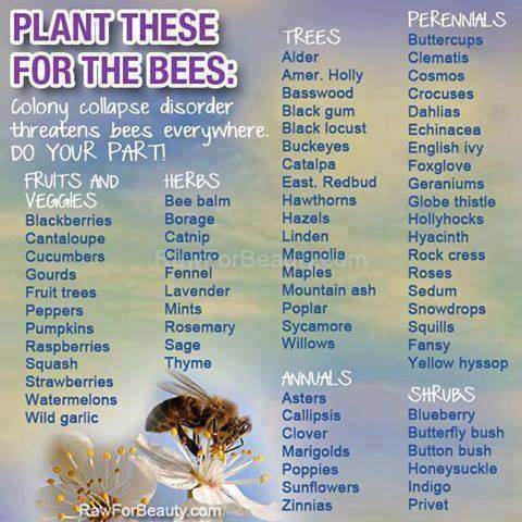 bee foraging, planting, pollinators, insects, food chain, honey bees.