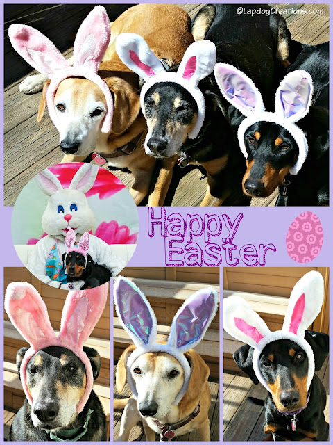 3 rescue dogs dressed up for Easter bunny ears
