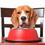 Quelle alimentation en cas d'insuffisance rénale ?