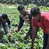 Παράνομα εισερχόμενοι και διαμένοντες μετανάστες επιτρέπεται πλέον να απασχολούνται στον αγροτικό τομέα