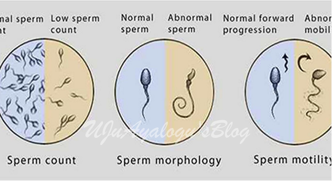 is sperm healthy for you