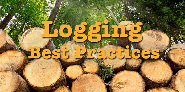 Log aggregators - logging best practices graphic