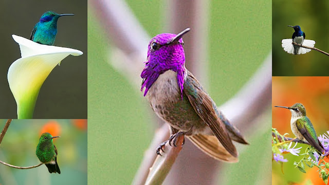 God's most beautiful creation, hummingbirds