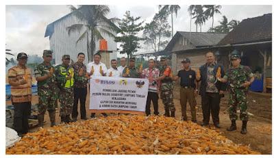 Bulog Borong Jagung Petani Sadar Sriwijaya Lampung Timur