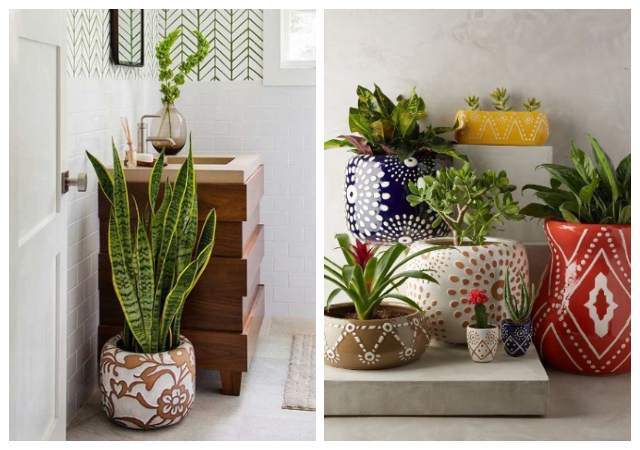 INDOOR PLANTS IDEAS