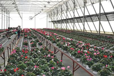 Tuyển 3 nam lao động làm công việc trồng hoa tại Aichi Nhật Bản