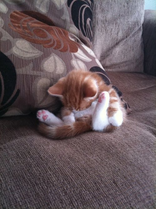 Most Awkward Cat Sleeping Positions Damn Cool Pictures