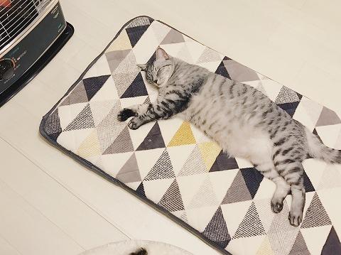 長座布団の上に寝転がっているサバトラ猫