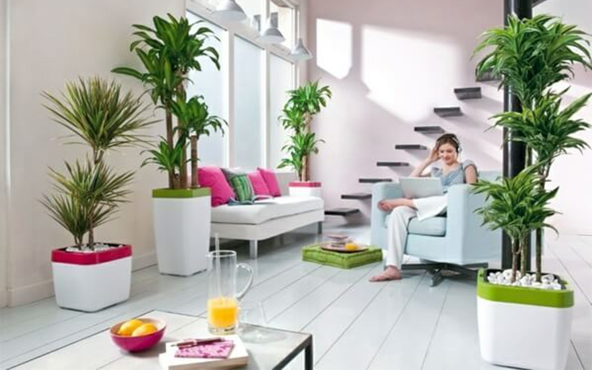Ladder Kerala How To Decorate Your Home With House Plants