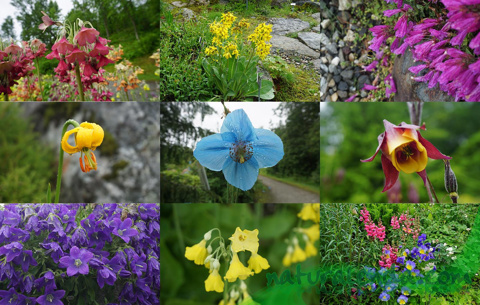 flores articas alpinas
