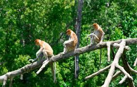 Keanekaragaman Makhluk Hidup (Materi Lengkap)