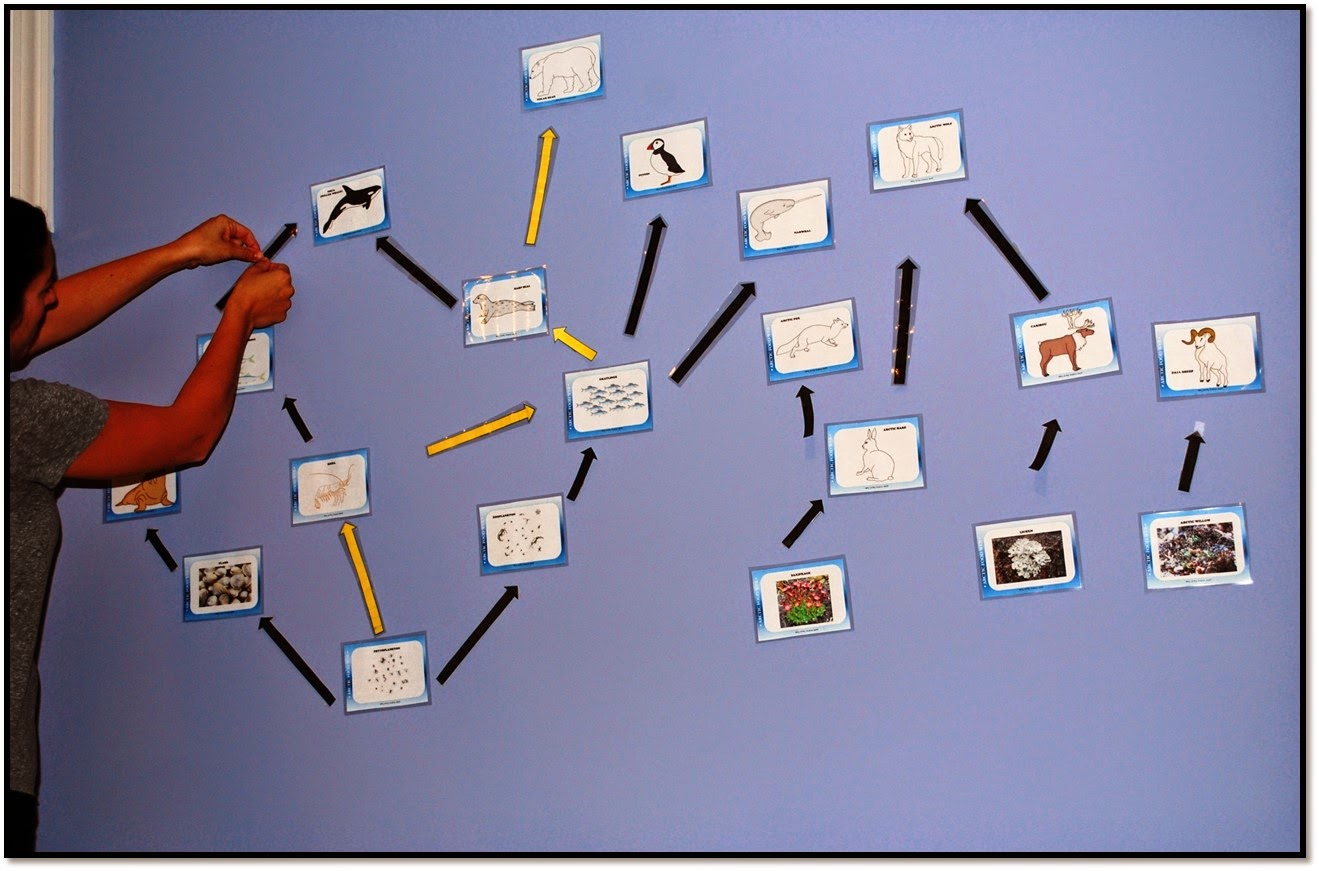 Arctic Food Web An Interactive Ecology Lesson