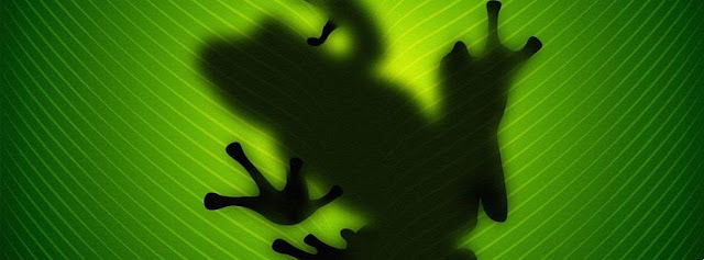 rana, ombra, foglia, verde,