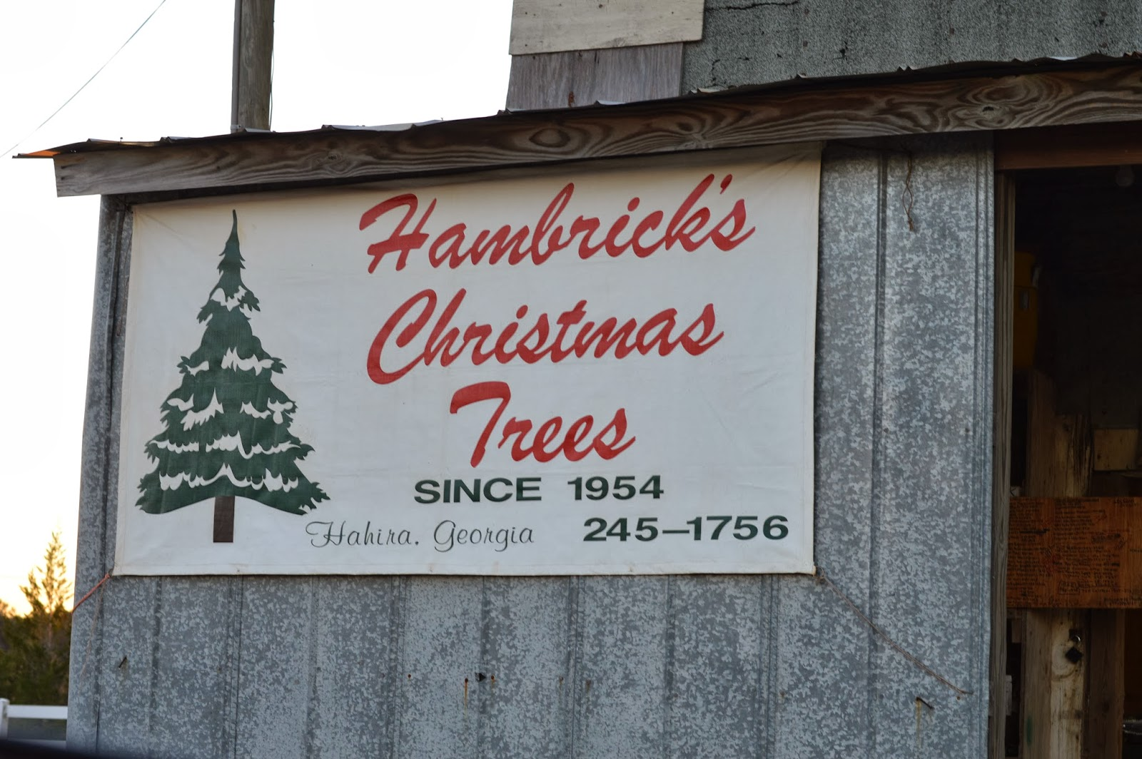 Hambrick's Tree Farm 2013