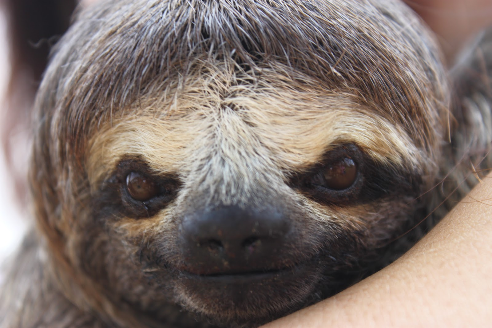 Sloths Smiling With Teeth