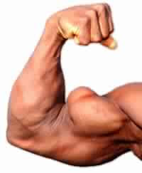 http://gym-workout101.blogspot.com/2015/08/best-biceps-exercises-for-size.html