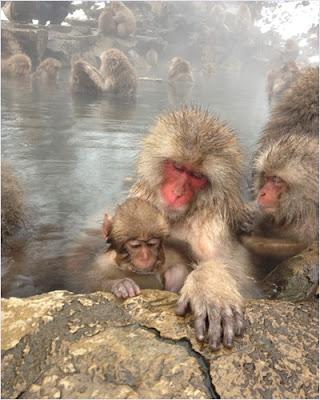 อุทยานลิงภูเขาจิโกคุดานิ (Jigokudani Monkey Park)