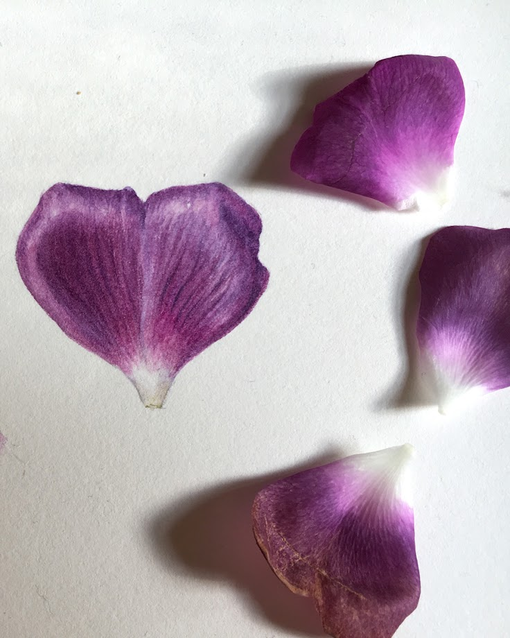 Painting of mauve rose patal and real petals