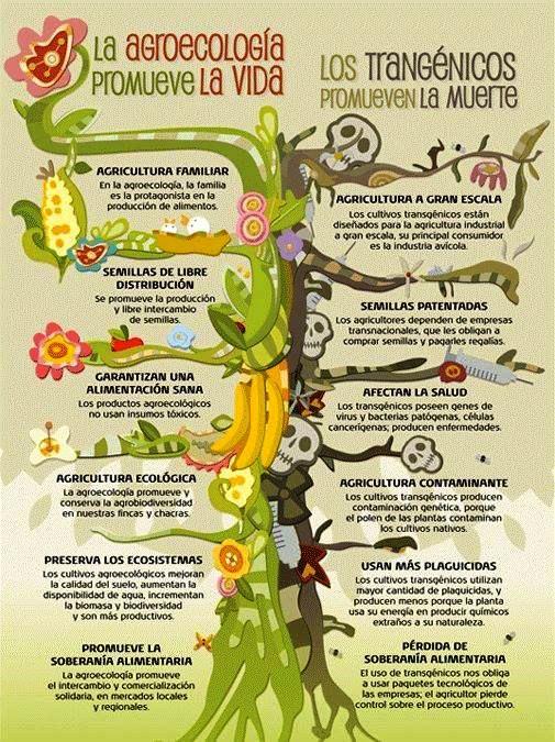 agroecologia-vs-transgenicos-manati